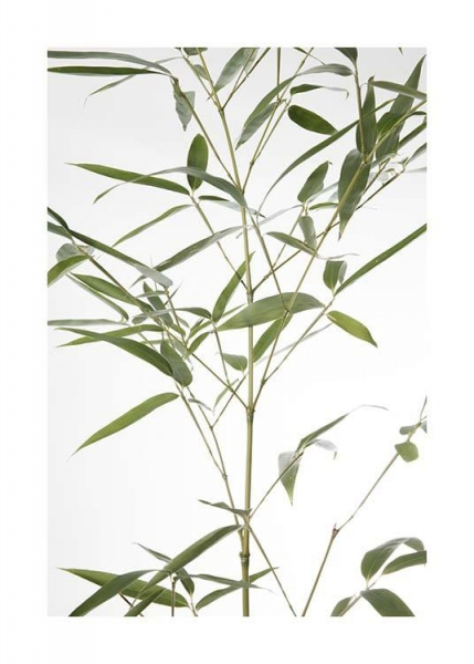 Bamboo Leaves No2 Poster