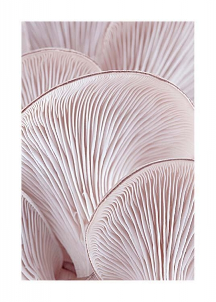 Pink Oyster Pattern Two Poster